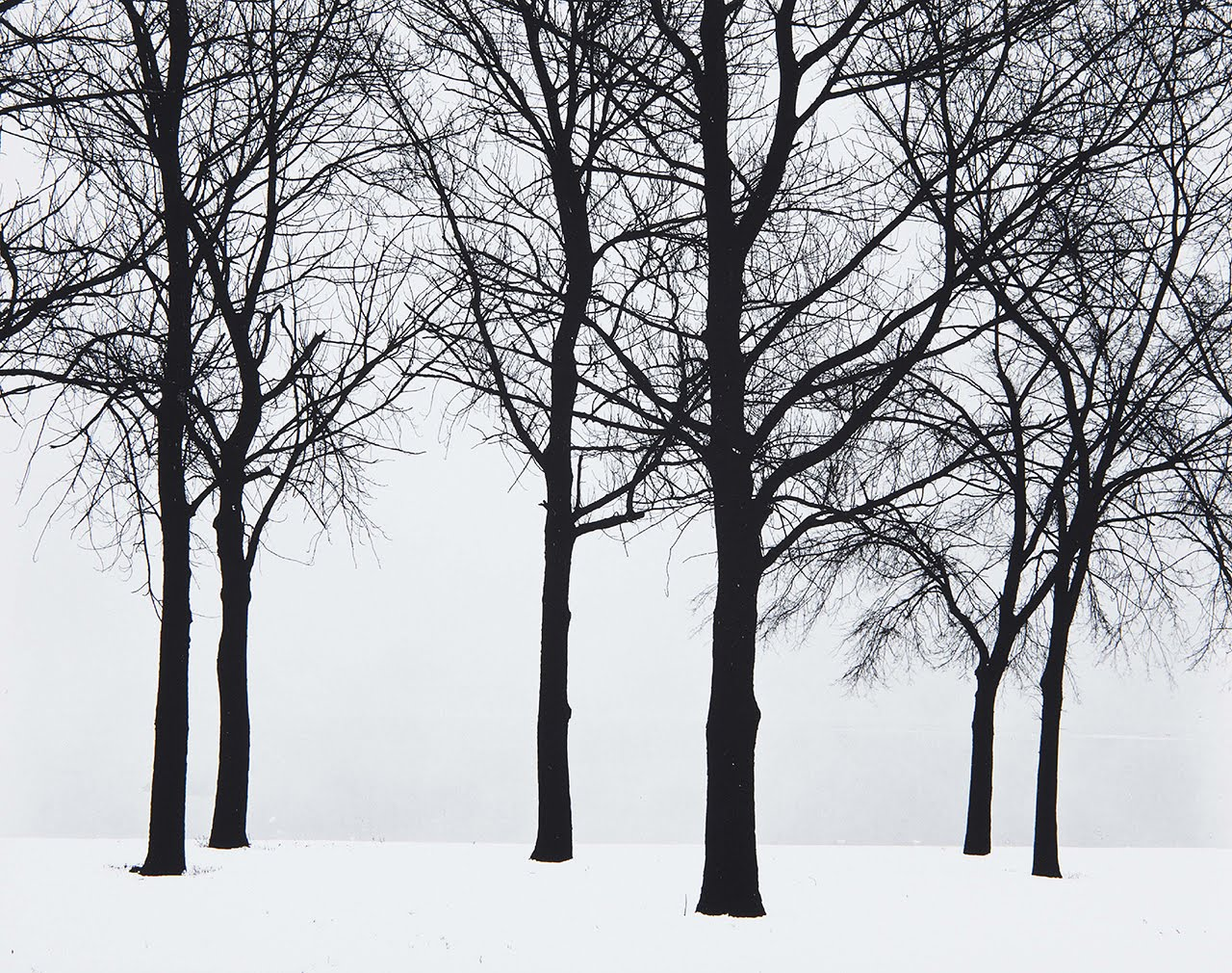 Chicago, Trees in Snow